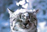 1412950168 yaka bude zima 2014 2015 яка буде зима 2014 2015