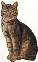 1417026249 yak namalyuvati kota krok 8 Як намалювати кота крок за кроком олівцем?