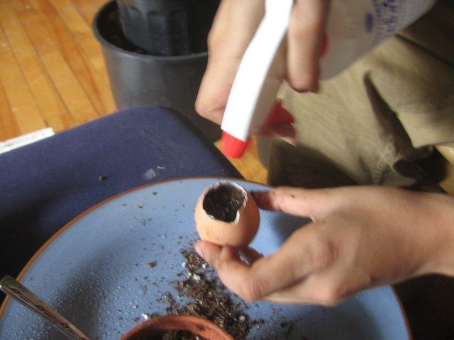 Горщики з яєчної шкаралупи