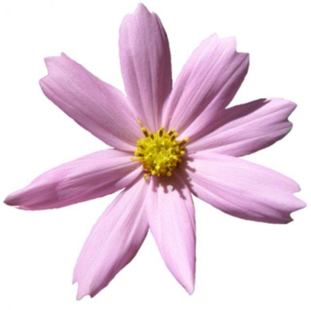 Квіти з шпону