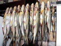 1424096487 yak vyaliti ribu Як в\ялити рибу?