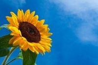 1426797431 narodn prikmeti pro lto Народні прикмети про літні місяці: Літо в Україні