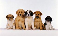 Імена для собак. Як вибрати собаку ім\я
