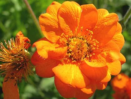 Багаторічні та однорічні бордюрні квіти: добірка найкращих квітів для клумби
