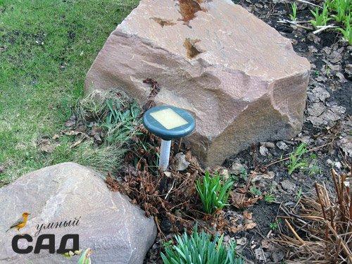 Боротьба з кротами на садовій ділянці: розбір найпопулярніших методів