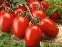 Десять кращих сортів томатів для теплиці: найурожайніші помідори
