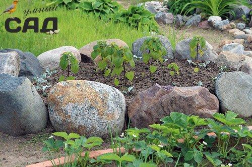 Гарні клумби з каменів своїми руками: робимо кам\яну клумбу на дачі