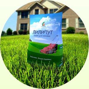 Газонна трава Ліліпут: особливості, характеристики, склад, плюси і мінуси, посів і догляд