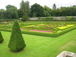 Газонна трава: види, особливості, характеристики, порівняння вартості, що врахувати при виборі трави