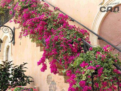 Красиві в\юнкі рослини для дачі: фото та поради по догляду за ними