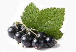 Листя смородини — користь і корисні властивості листя смородини