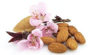 Мигдаль, його склад і корисні властивості, калорійність і шкоду. Користь горіхів мигдалю для жінок і при вагітності