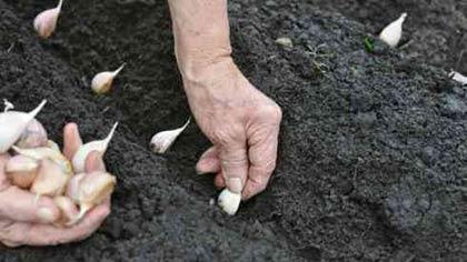 Осінні роботи в саду: готуємо свою ділянку до зимівлі