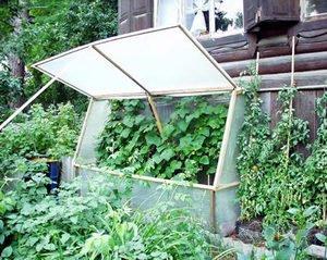 Парник для огірків: як самостійно зробити парник для огірків та все що для цього необхідно