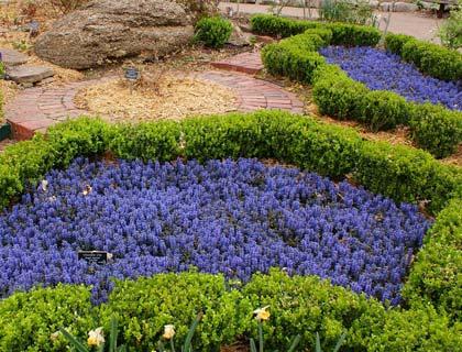 Почвопокривні багаторічники і низькорослі рослини в ландшафтному дизайні