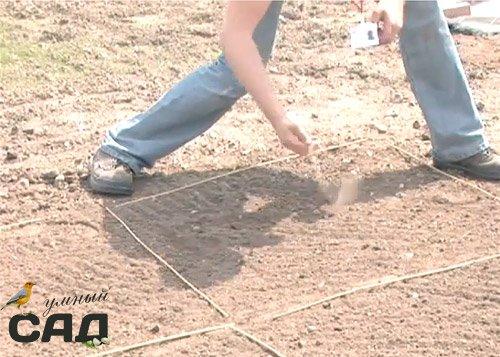 Как сажать газонную траву осенью 96
