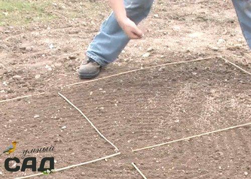 Посадка газонной травы своими руками осенью 56