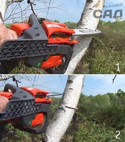 Розбираємося, як правильно спиляти дерево бензопилою: техніка та поради