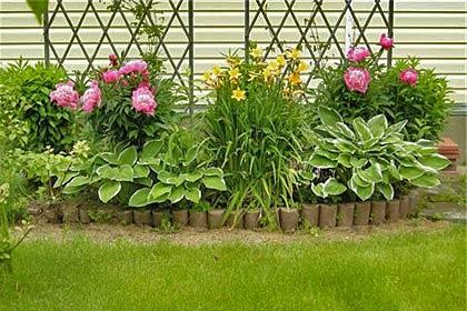 Самі невибагливі квіти для дачі, саду та клумби: однолітні і багаторічні