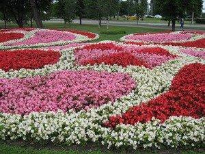 Схема клумби: види клумб, варіанти поєднання рослин, як скласти схему розсадки квітів