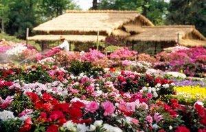 Схеми клумб безперервного цвітіння: існуючі схеми, перелік рослин, створення клумби своїми руками