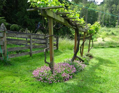 Как сделать опору для винограда на даче