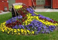 Створюємо клумбу безперервного цвітіння: фото, приклади та майстер класи