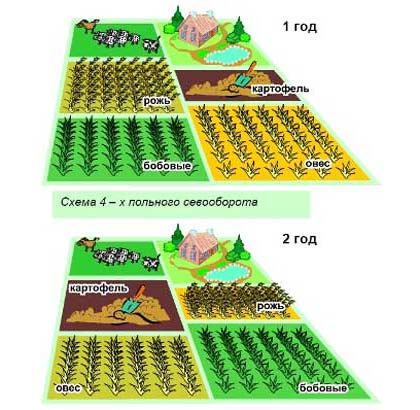 Сівозміна на грядці: правильна сівозміна овочів на ділянці