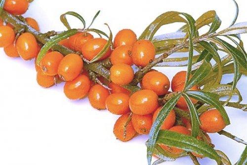 Осінні ягоди для краси
