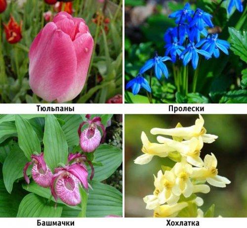 Тіньолюбні квіти—багаторічники в саду: огляд популярних сортів і видів