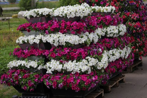 Вертикальне озеленення: фотогалерея, можливі способи, підбір рослин, висадка, догляд