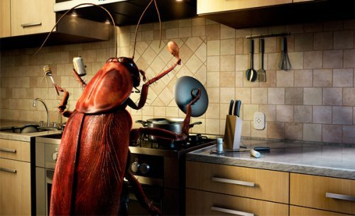 Як позбутися від тарганів у квартирі раз і назавжди