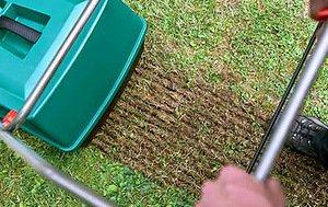 Трава для газону, її необхідні якості, розбираємося, як садити траву навесні і готувати пошту
