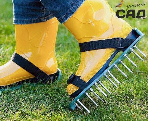 Виконуємо догляд за газоном навесні і восени перед зимою: майстер класи