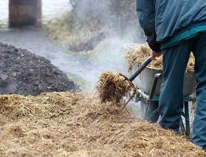 Вирощування картоплі під соломою: як садити картоплю і як за ним доглядати