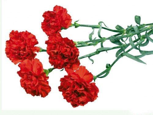 Як вибрати свіжі квіти на свято?