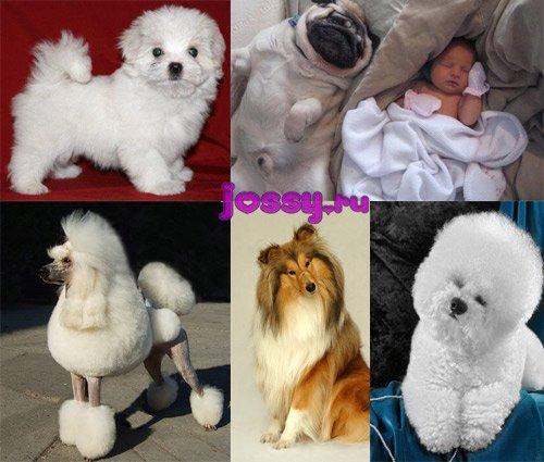 Яку вибрати собаку для дитини   найкраща собака для дитини