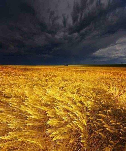 1444411270 oboyi na robochiy stl ukrayina 6 Обої на робочий стіл Україна, скачати безкоштовно