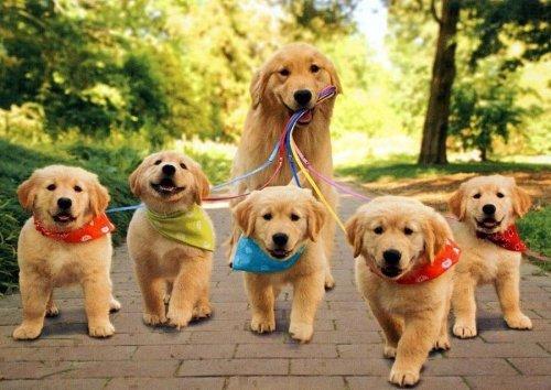 1452032626 yak nazvati sobaku Як назвати собаку? Список кличок   імен для собак, різних порід