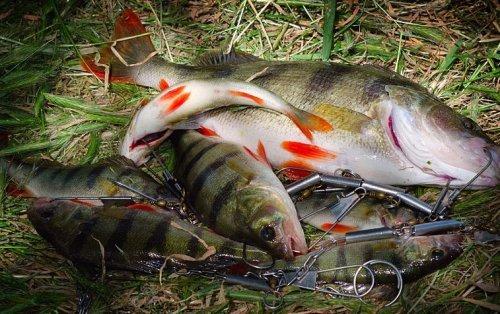 Секрети смачної рибки холодного копчення