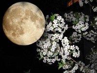 Місячний календар городника на травень 2015 рік