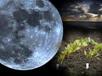Місячний календар садівника городника на квітень 2015 рік