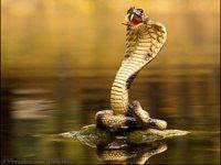 Символ 2025 року — Змія