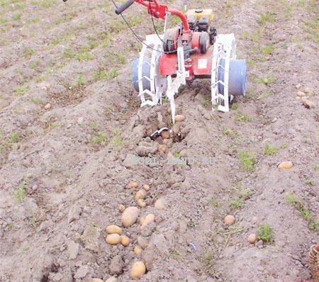 Як садити картоплю