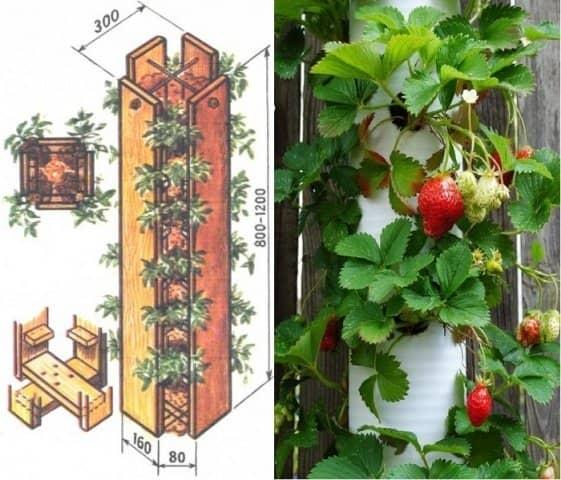 Вертикальный способ выращивания клубники чертежи 77