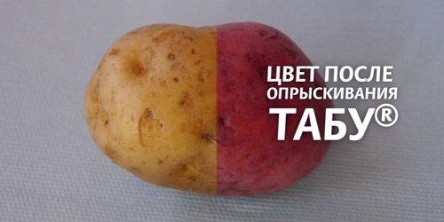 f2dce2adbf30de34bfc7afa4f7739ec6 Табу: обробка картоплі перед посадкою