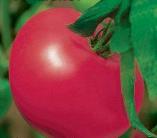 Сорт томатов мажор отзывы