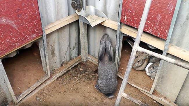 Выращивание кролей в яме 51