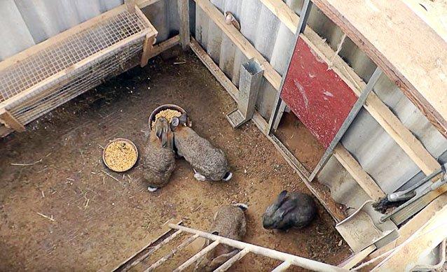 Выращивание кролей в яме 65